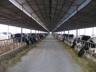 China Vor-ausgeführte Stahlfeldsysteme, die Kuh/Pferd mit Dach-Platten züchten fournisseur